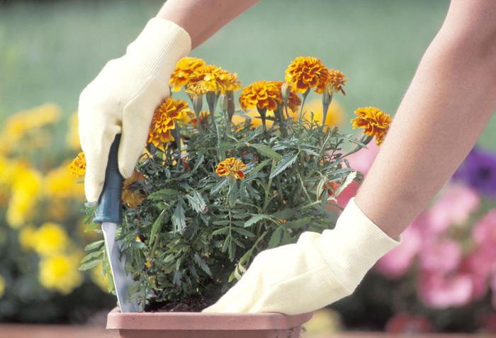 Nasi pasjonaci kwiaty